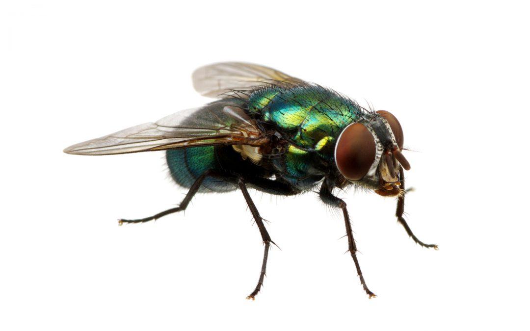 【世界正经事】关于苍蝇那些你我不知道的事