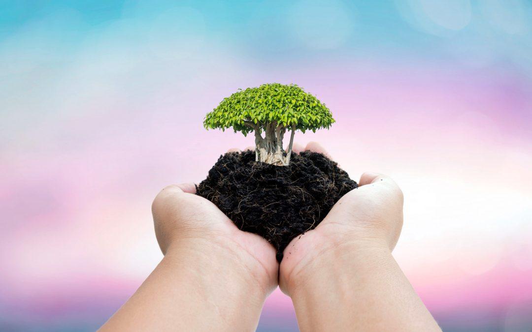 【全球Focus】世界土壤日