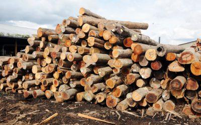 【财经+】除了家具,木材还可以用来…