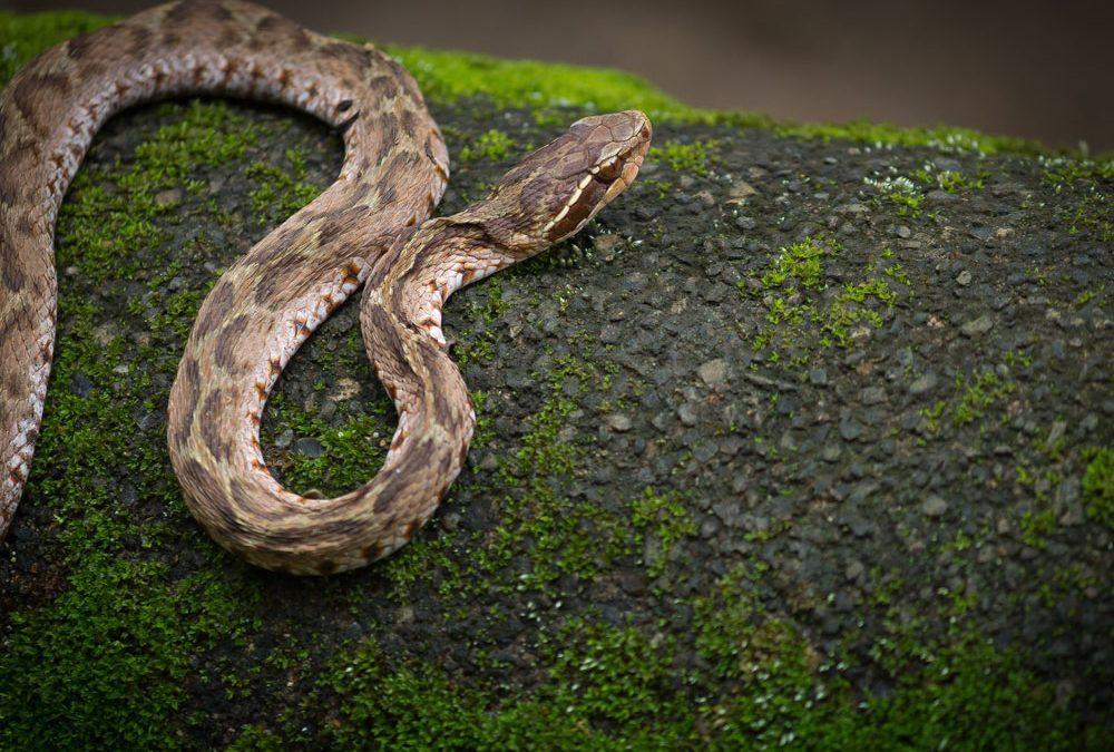 """【下班有话题】""""蛇""""出鬼没!"""