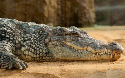 【下班有话题】恐龙犹存?其实是鳄鱼出没!