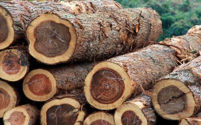 【财经+】木头也有出头天