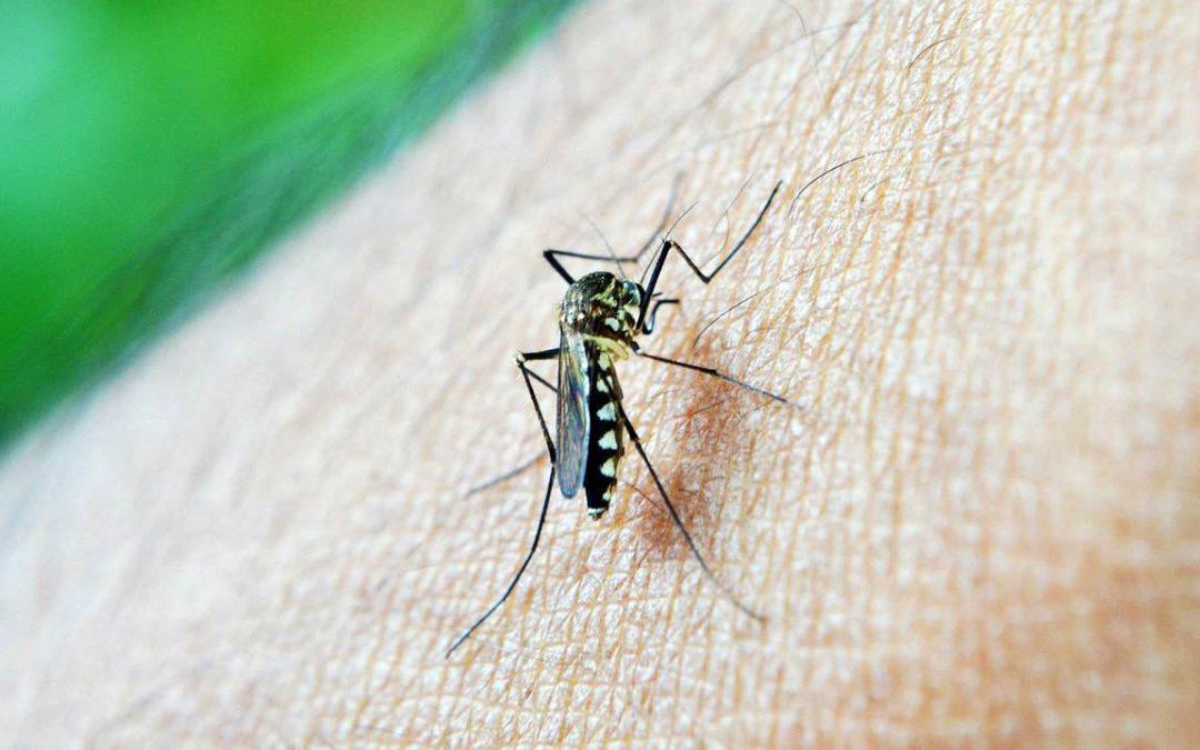 【下班有话题】蚊症年年有,为何今年首季病例已翻3倍?