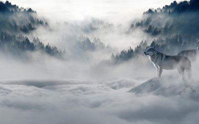 【下班有话题】2019世界地球日:野生动物的绝迹管我们什么事