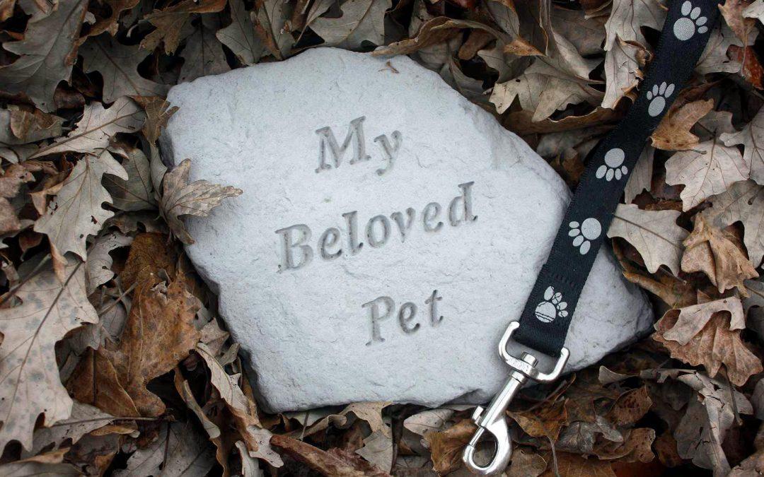 【创业新世代】宠物善终服务,让宠物有尊严地离开