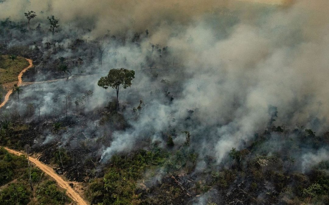 【早班精华】为何我们要关注亚马逊大火