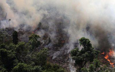 【科技360】森林失火,殃及了谁?