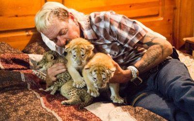 【一出好戏】饲养凶猛动物到买凶杀人的《Tiger King》,美国人疫情期疯狂追看?