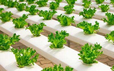 【生活哪里有问题】回归生活本质,自己在家里种菜!