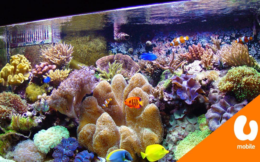 【城市生活家】TankQ 为你家的鱼儿安置一所舒适的家
