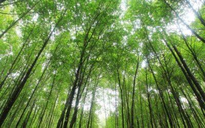 【我们旅行中】世界环境日-你不知道的大马生态之美