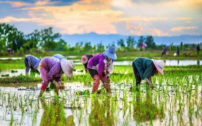 【早班精华】当农夫,赚更多更快活?