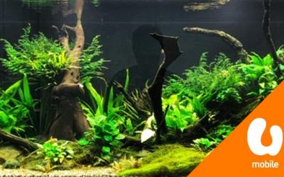 【下班生活志】鱼缸造景新趋势,疗愈城市人的空虚与焦虑