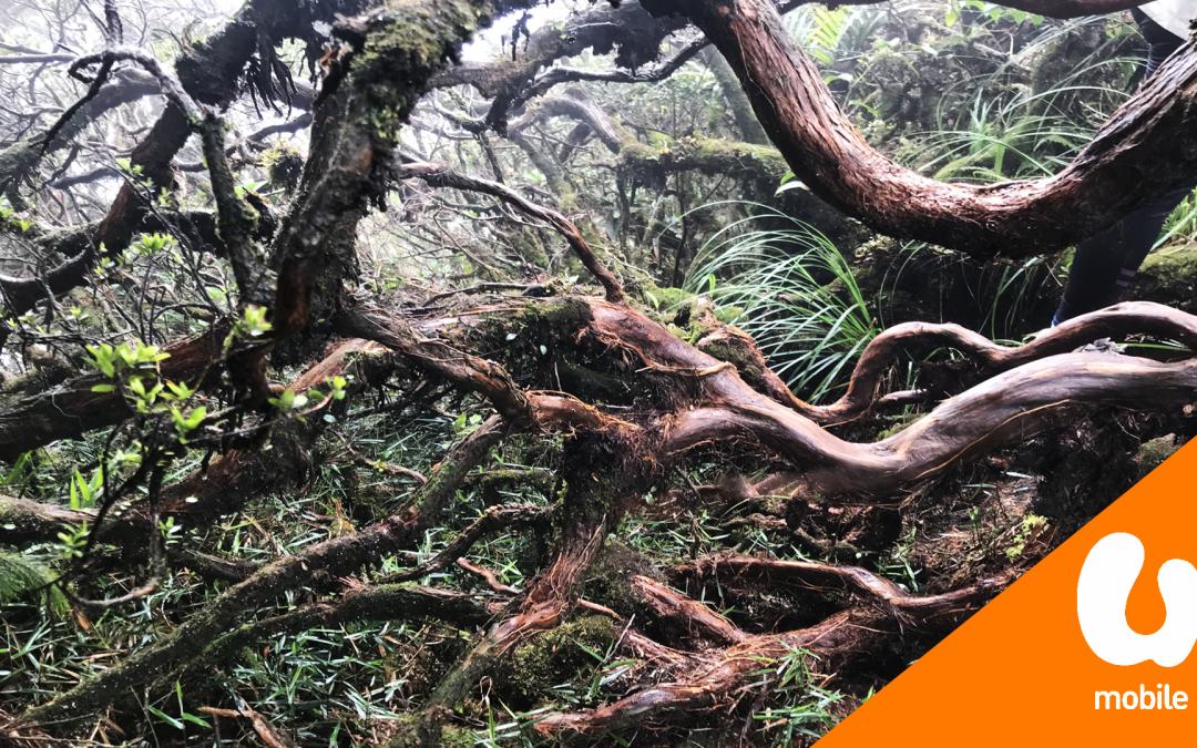【我们旅行中】带你到云顶走一趟美丽又魔幻的苔藓森林