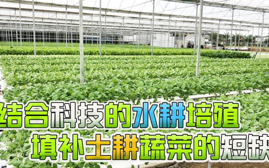 【创业168】水耕培殖除了提高粮食产量,还有什么好处?