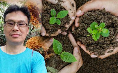 【我们旅行中】如何种树才能真正达到绿化环境的目的?